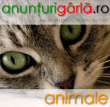 Imagine anunturi animale